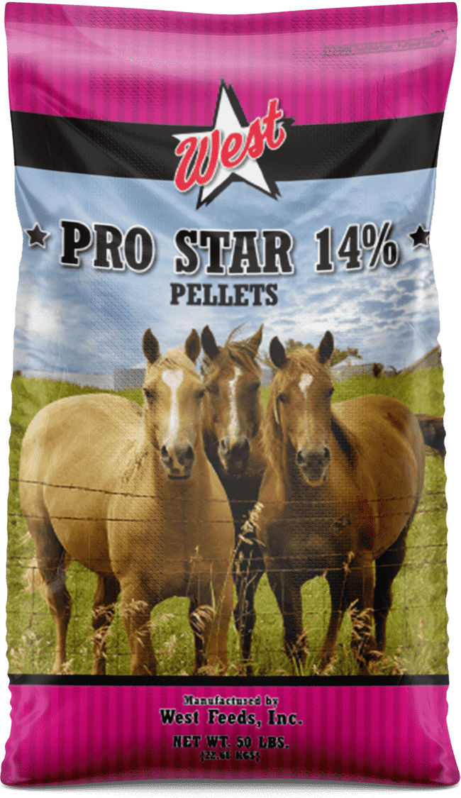 pro star 14 horse feed bag