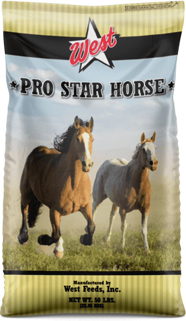 pro star horse feed bag