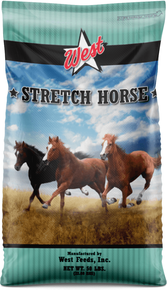 stretch horse feed bag